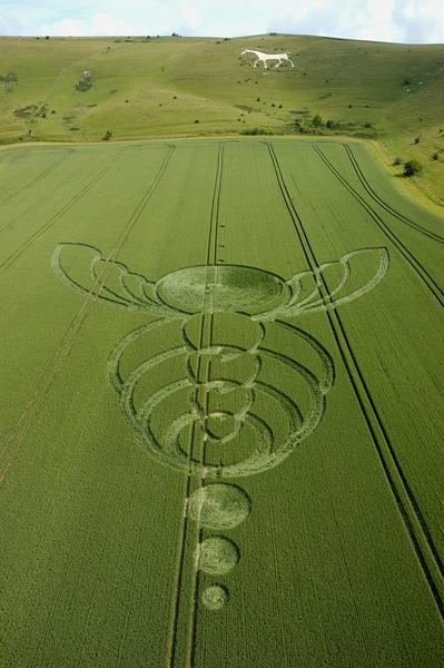 10-Milk-Hill-Alton-Barnes-Wiltshire-Wheat-26-06-04-L