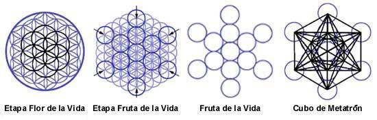 etapas_flor_de_la_vida