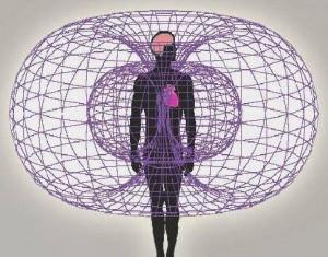 toroide corazon humano