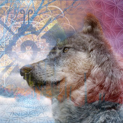 cosmic-dog