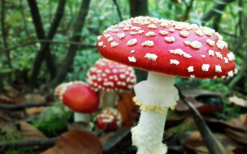 2880x1800_Mushroom_Kingdom_by_musback