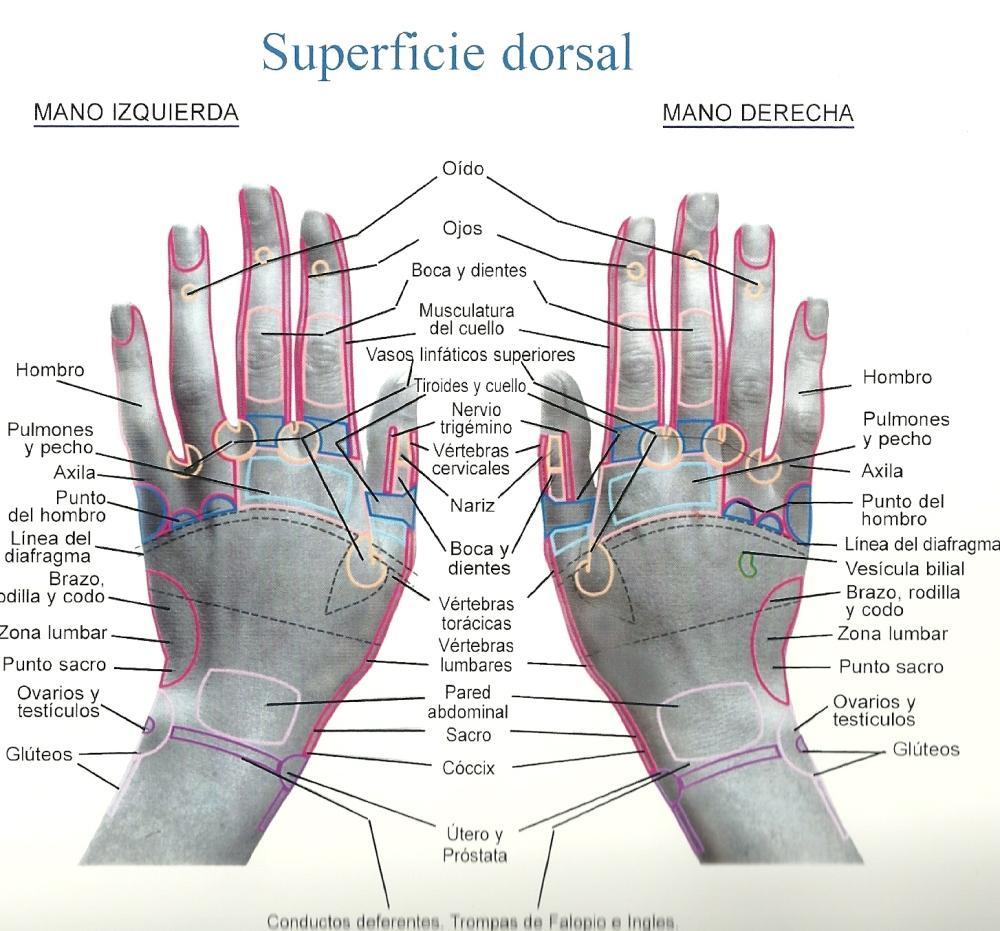 Superficie+dorsal