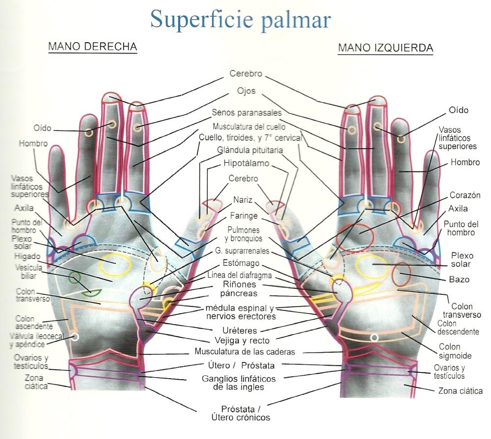 Superficie+palmar