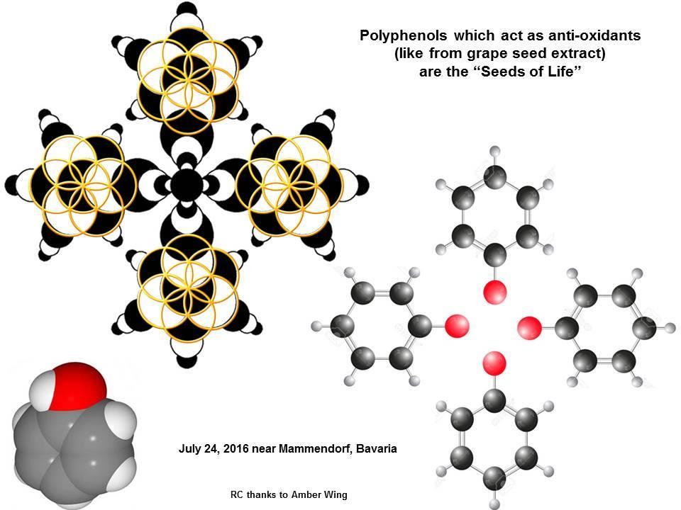 polifenoles molecula hexagono