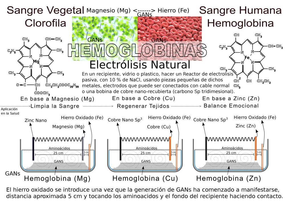 Gans Hemoglobina producción - info v 1-2.png